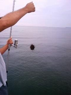 海釣その五